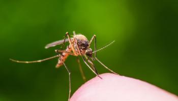 Győzzétek le rovarokat természetes módon és vegyszerek nélkül